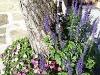 Flowers_Adorno