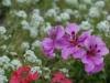 Pogiolo_Dante_Flowers